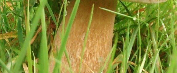 Verlängerung! Pilz- und Trüffelmenü 2019